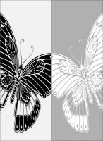 Бабочки 78